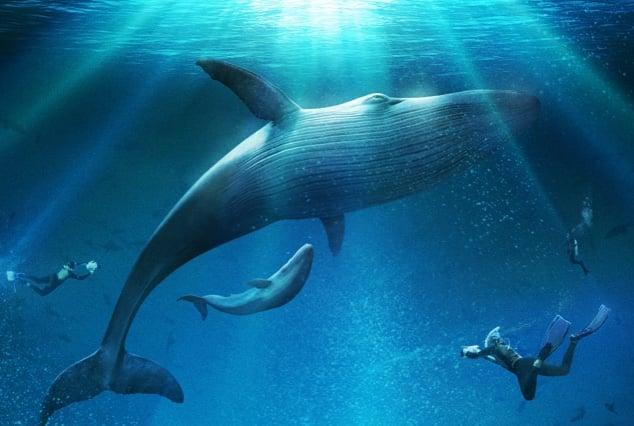 Dolphin Oculus Go